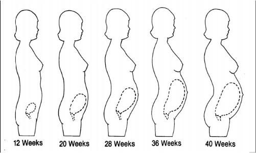 The Effects of Pregnancy on the Body